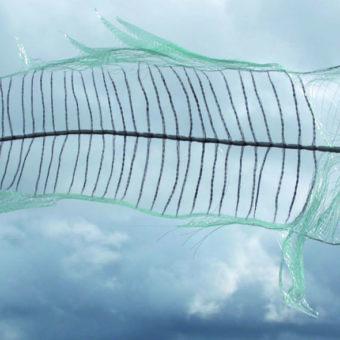 OEUVRE HÉLÈNE poisson queue basse recadré